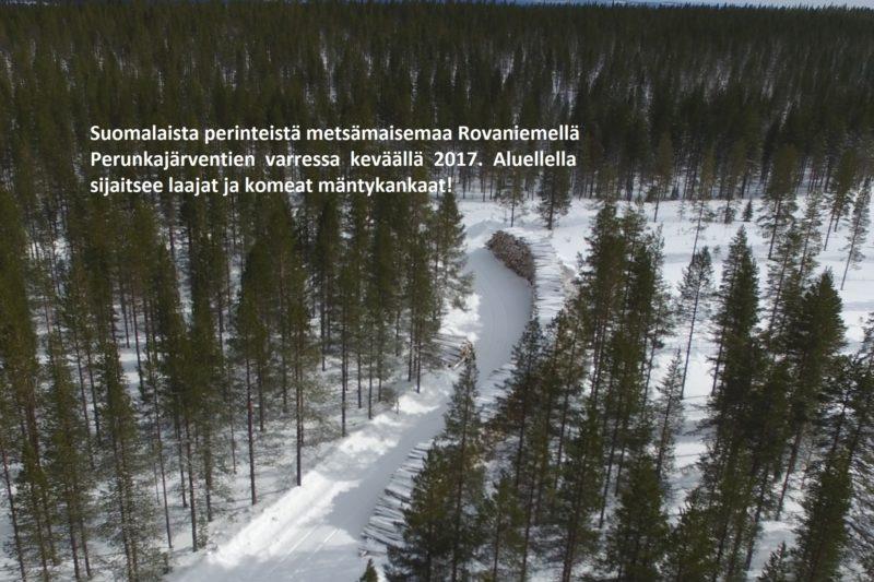 Metsän arvo lahjaverotuksessa